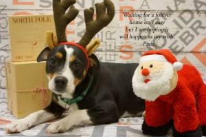 2015 SPCA Christmas Pic